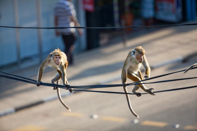 monkeykingdom 4